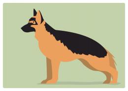 イヌ:シェパード