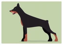 イヌ:ドーベルマン